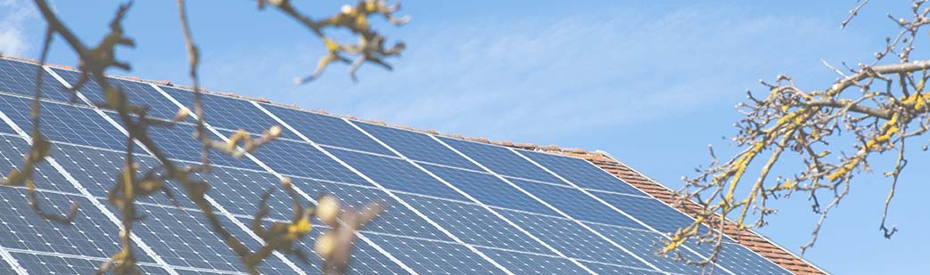 solar panels on roof with buds on trees in early spring